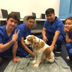 eterinary office assitant program