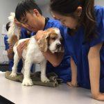 veterinary assitant