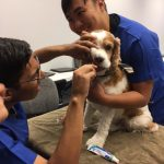 veterinary course